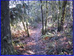 Hagg Lake Trail Section